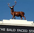 The Bald Faced Stag
