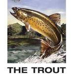 The Trout