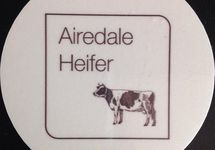 Airedale Heifer